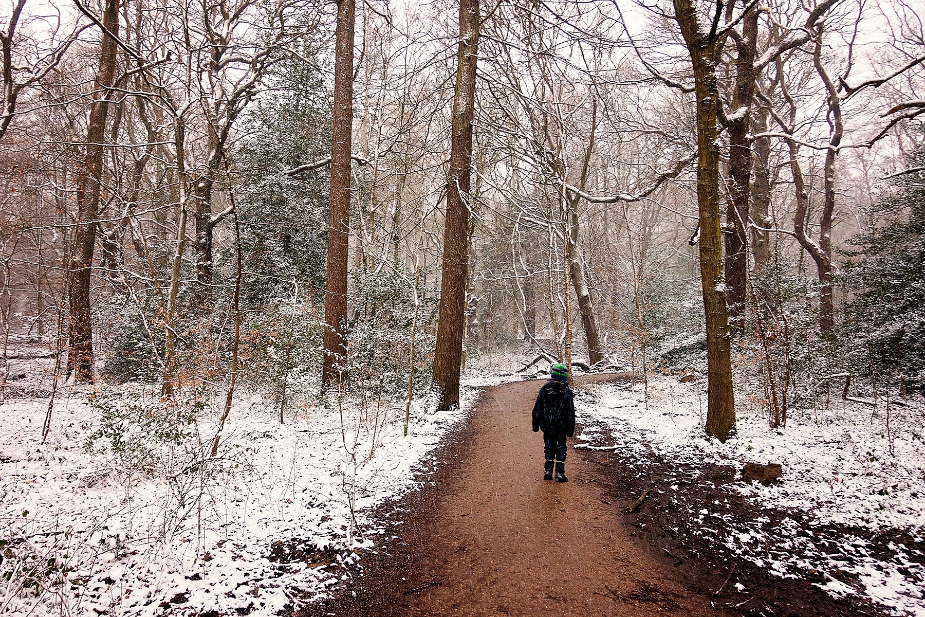 Snowy Ecclesall Woods in Sheffield