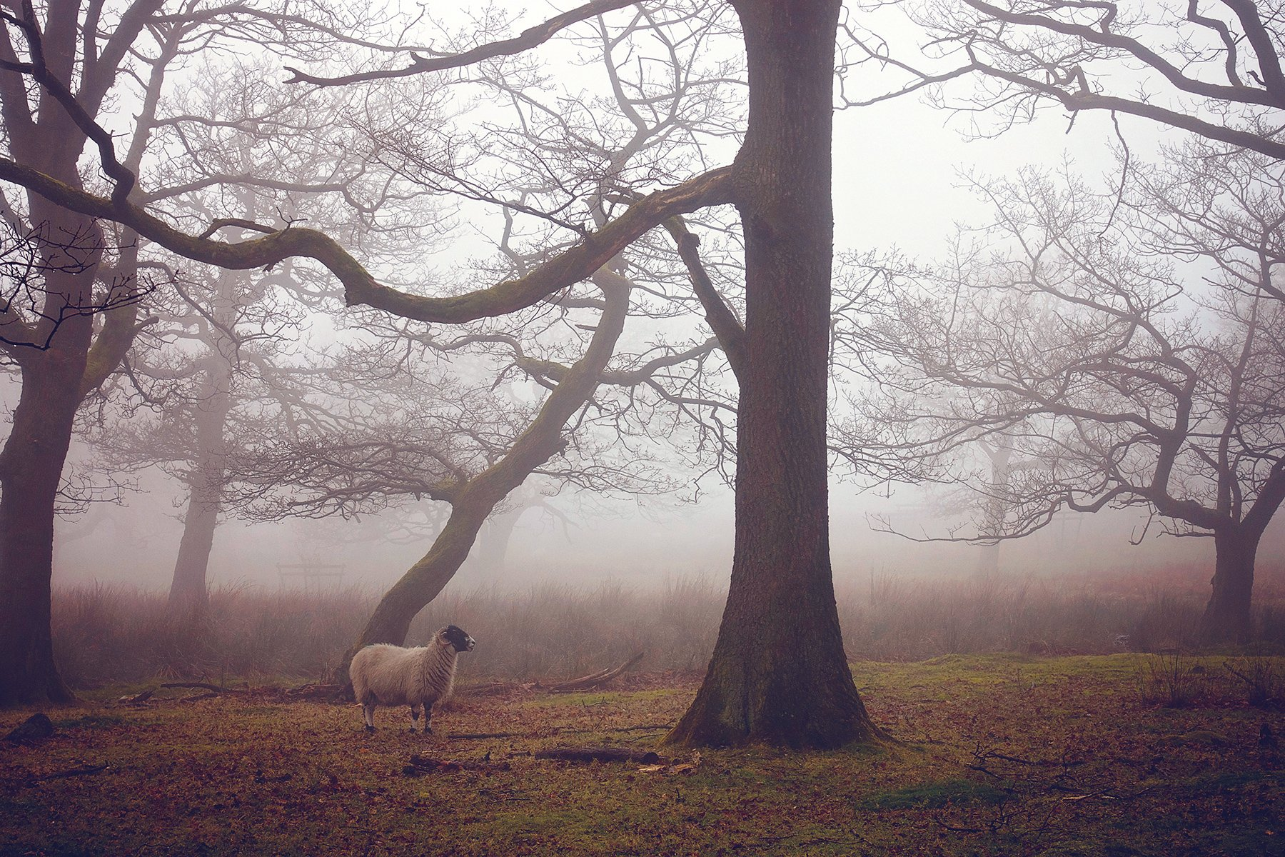 Misty Longshaw in the Peak District