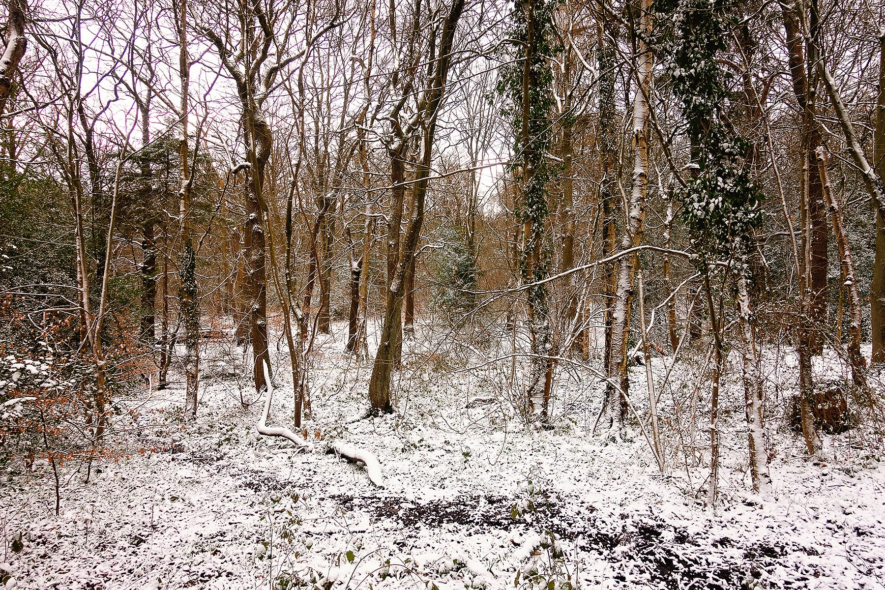 Beautiful snowy Ecclesall Woods in Sheffield