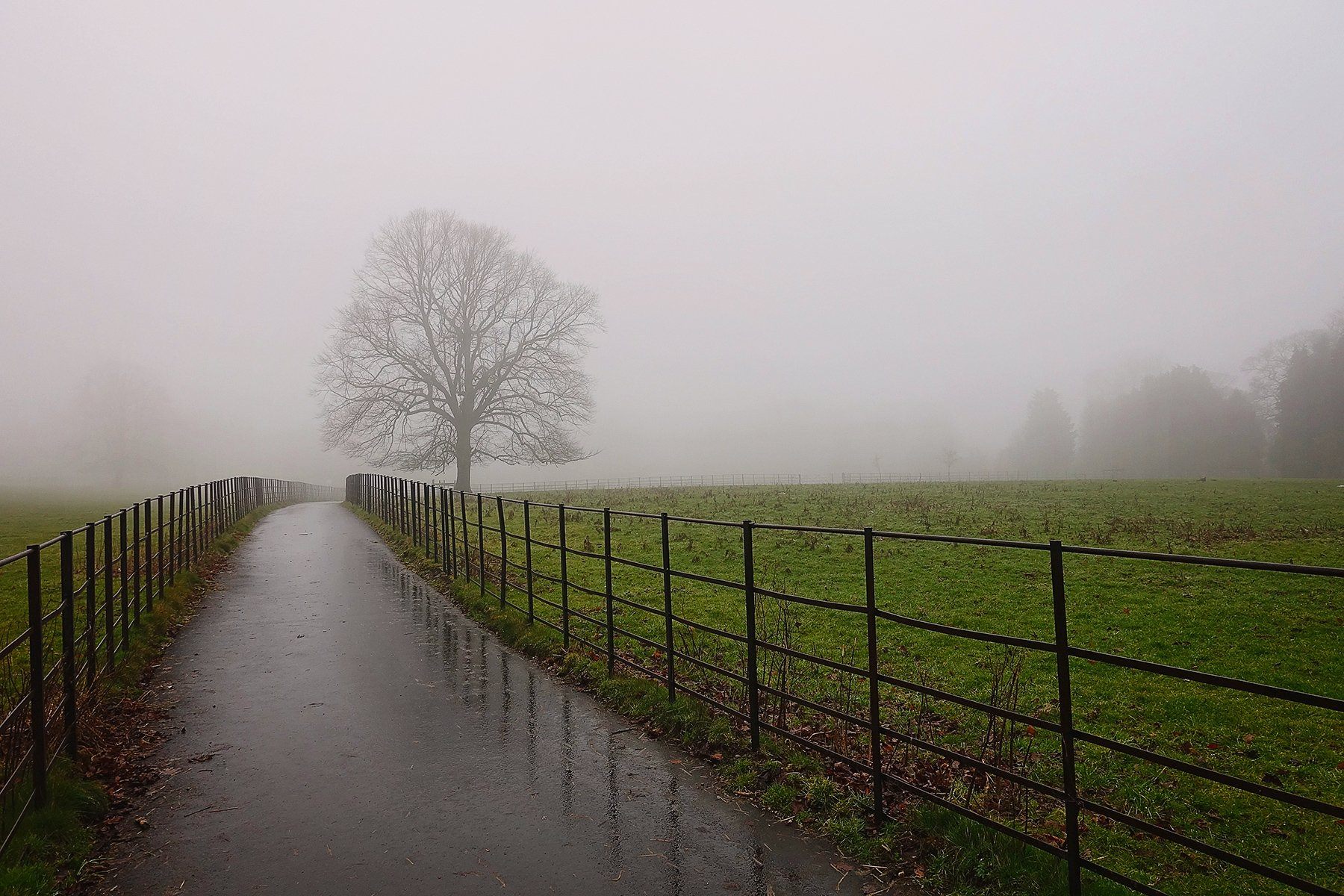 Misty Graves park in Sheffield