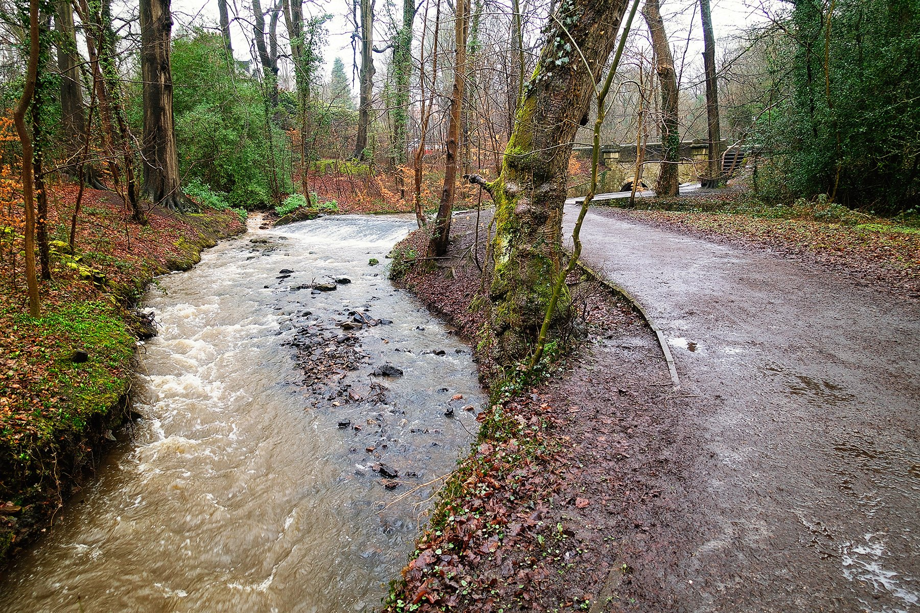 Endcliffe park to Forge Dam walk