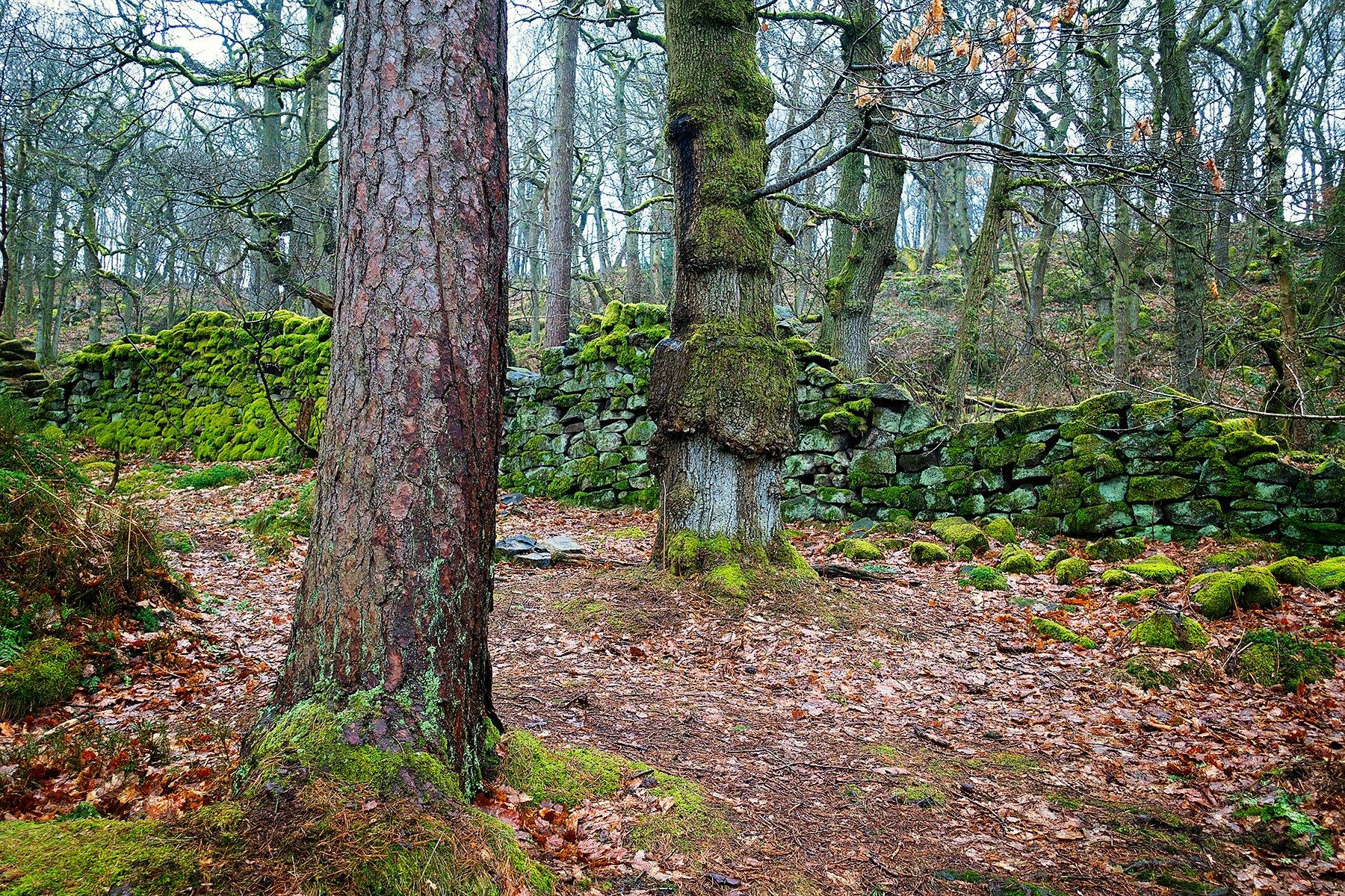 Padley Gorge in the Peak District