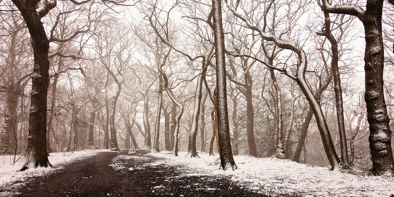 WHITE ECCLESALL WOODS, SHEFFIELD
