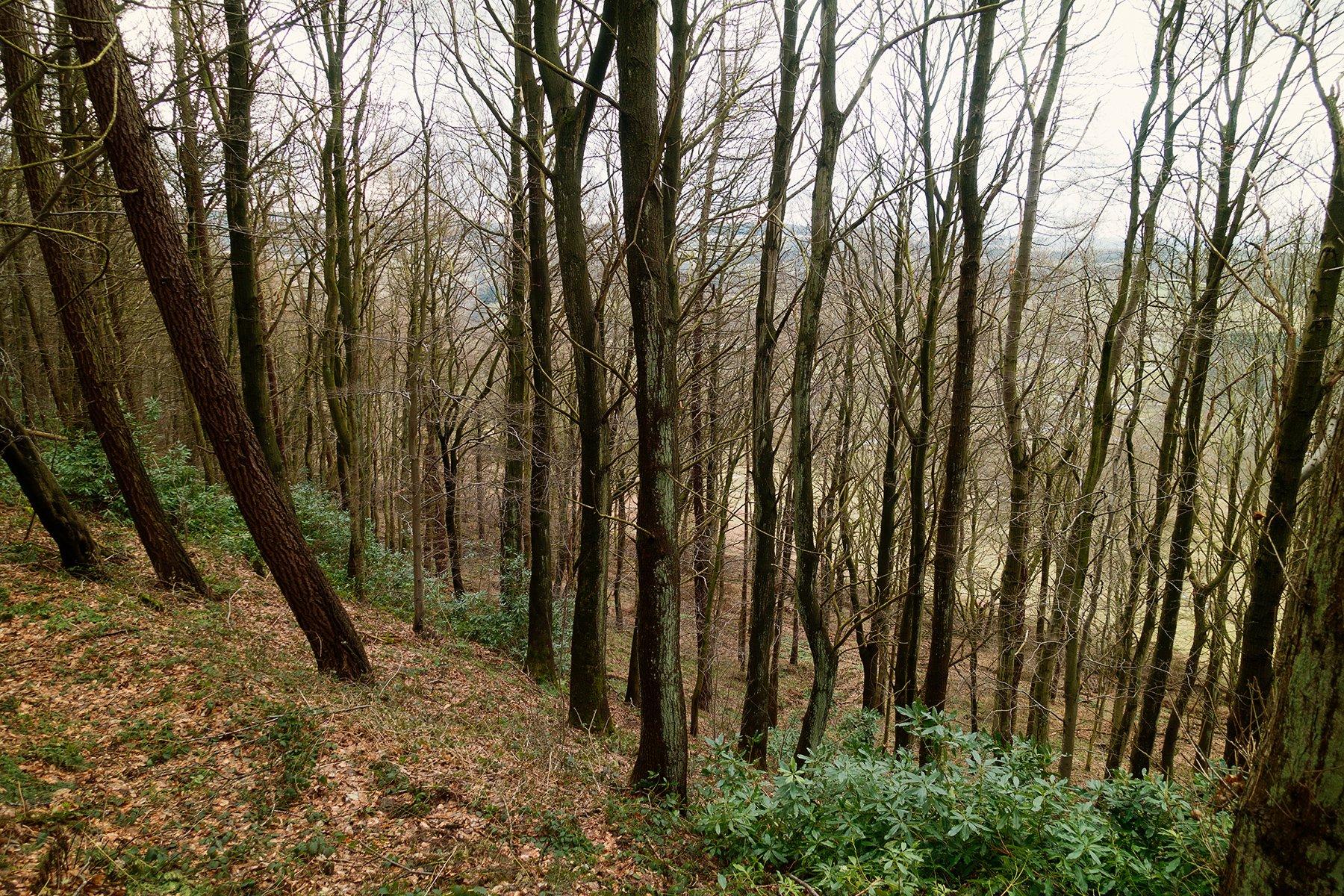 Chatsworth woods