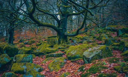 MAGICAL PADLEY GORGE, LONGSHAW ESTATE, DERBYSHIRE