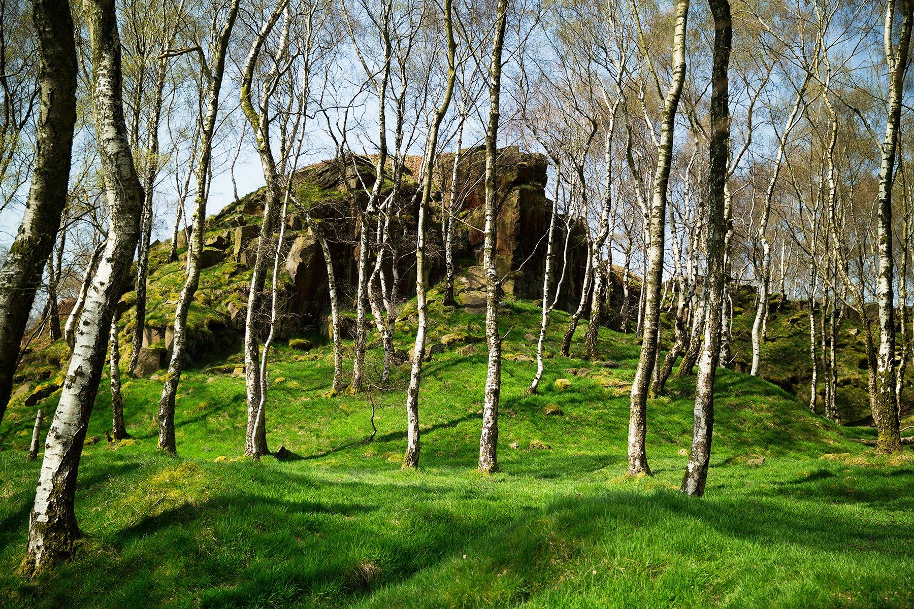 Bolehill Woods in the Peak District