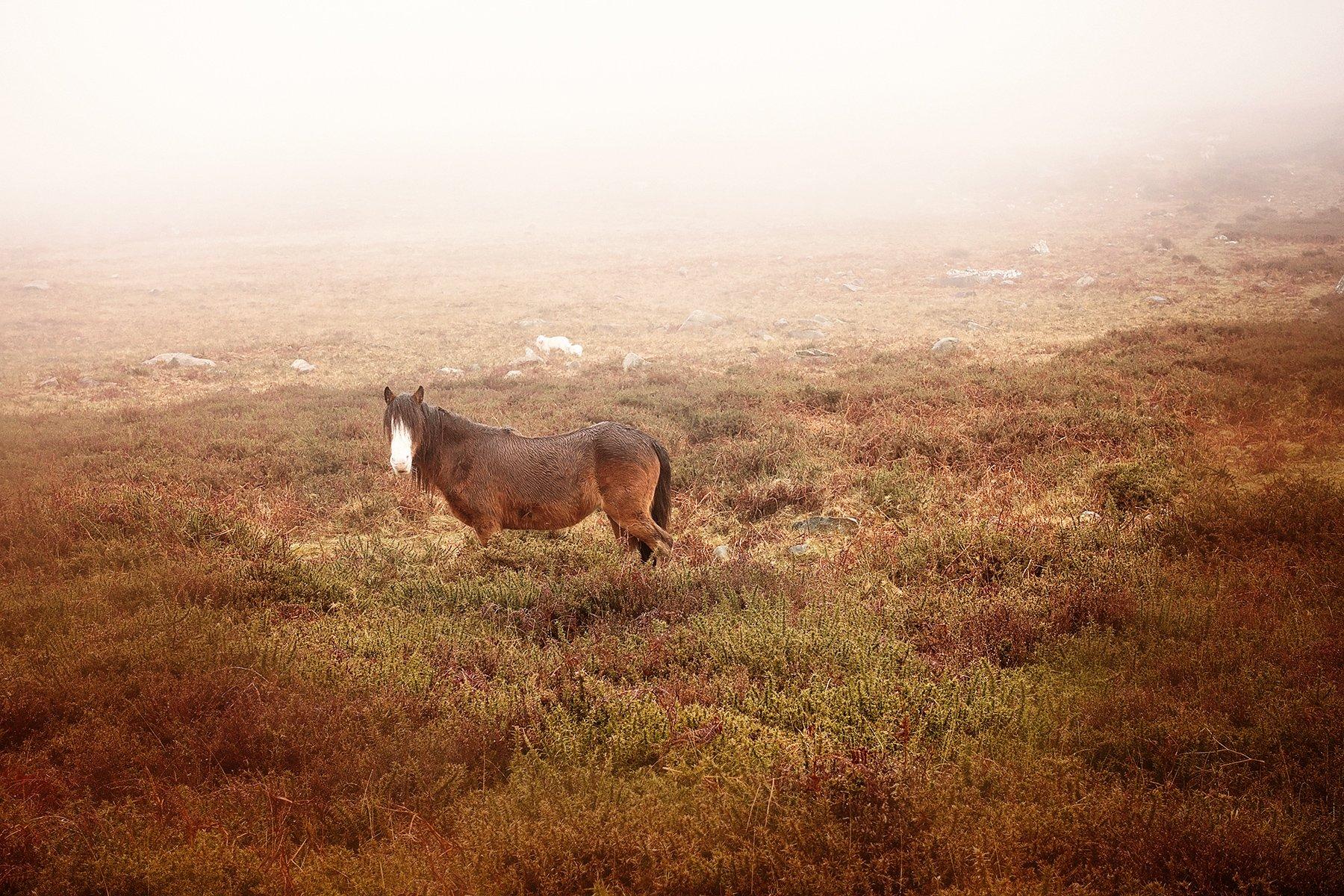 Horse in Carn Ingli