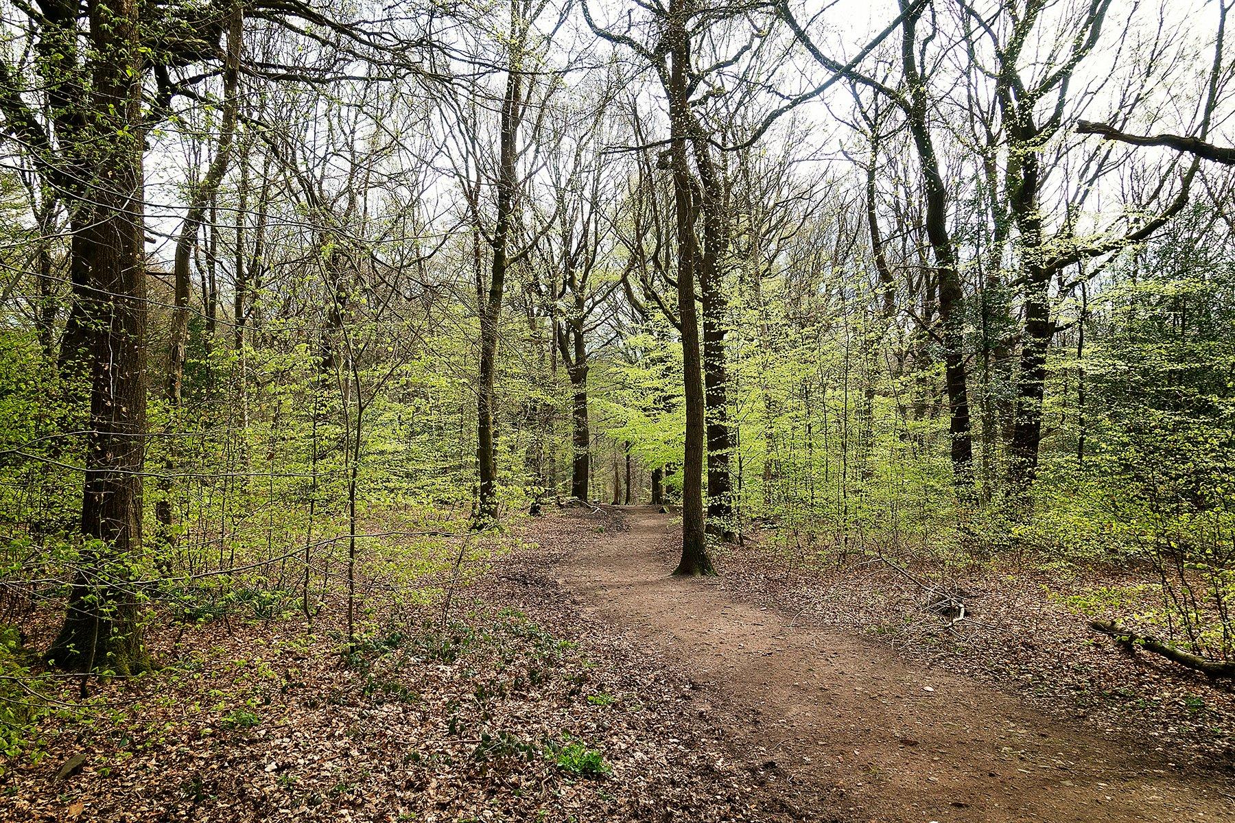 Spring in Ecclesall Woods