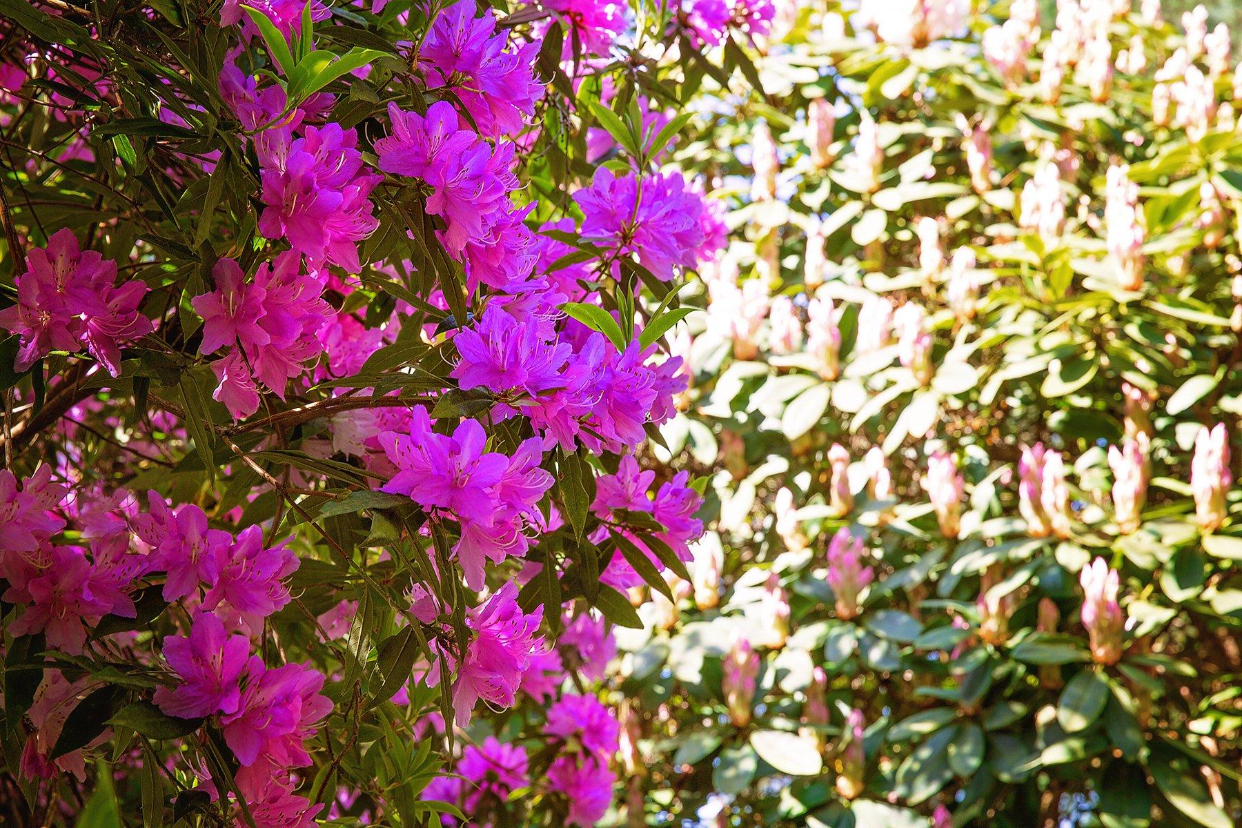 Lea Garden