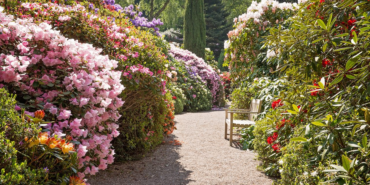 LEA GARDENS – A HIDDEN GEM, DERBYSHIRE