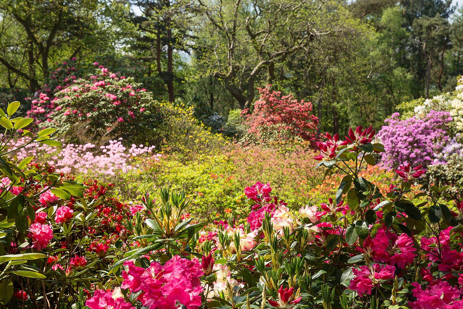 Lea Gardens near Matlock