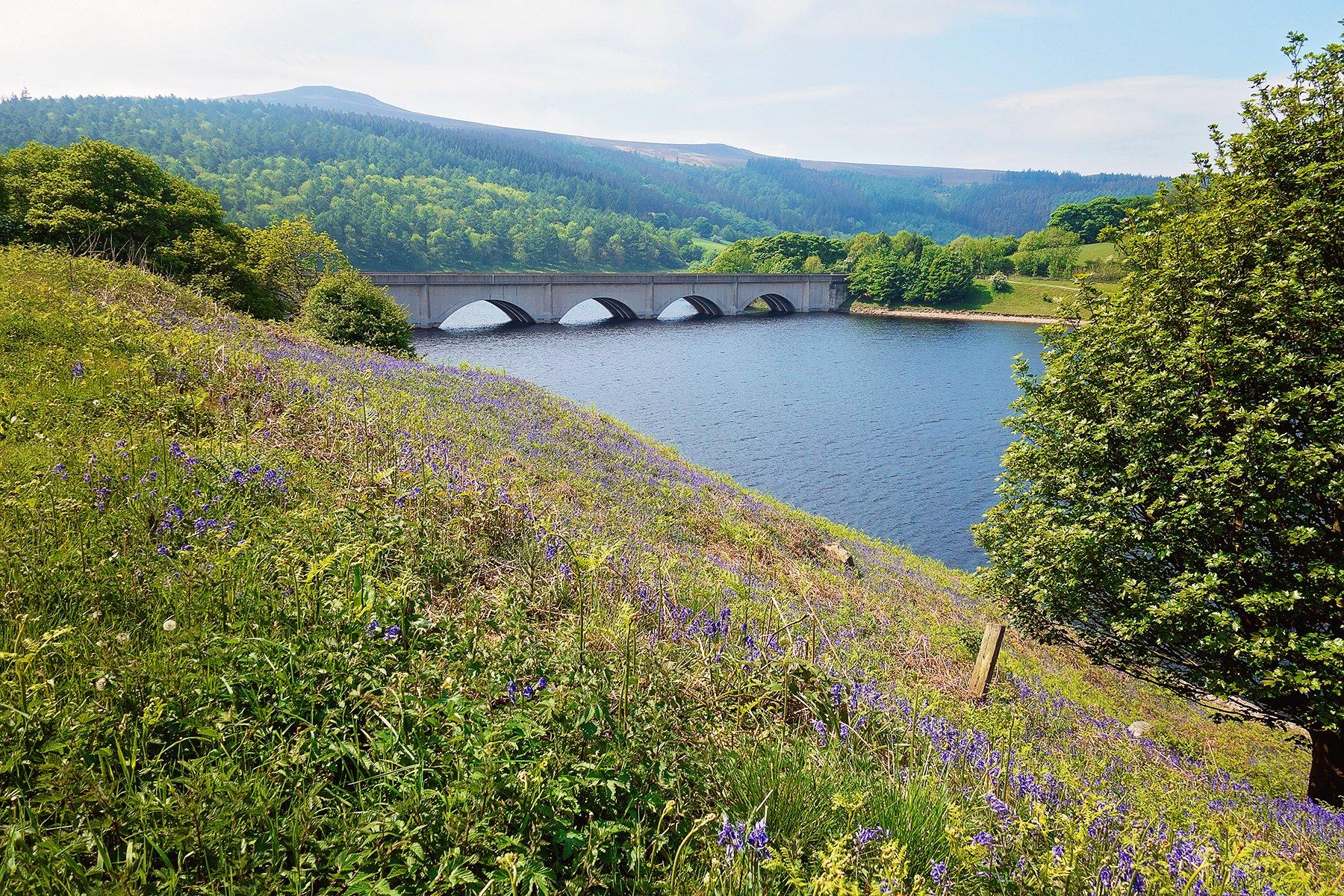 Perfect walk around Ladybower Reservoir full of bluebells