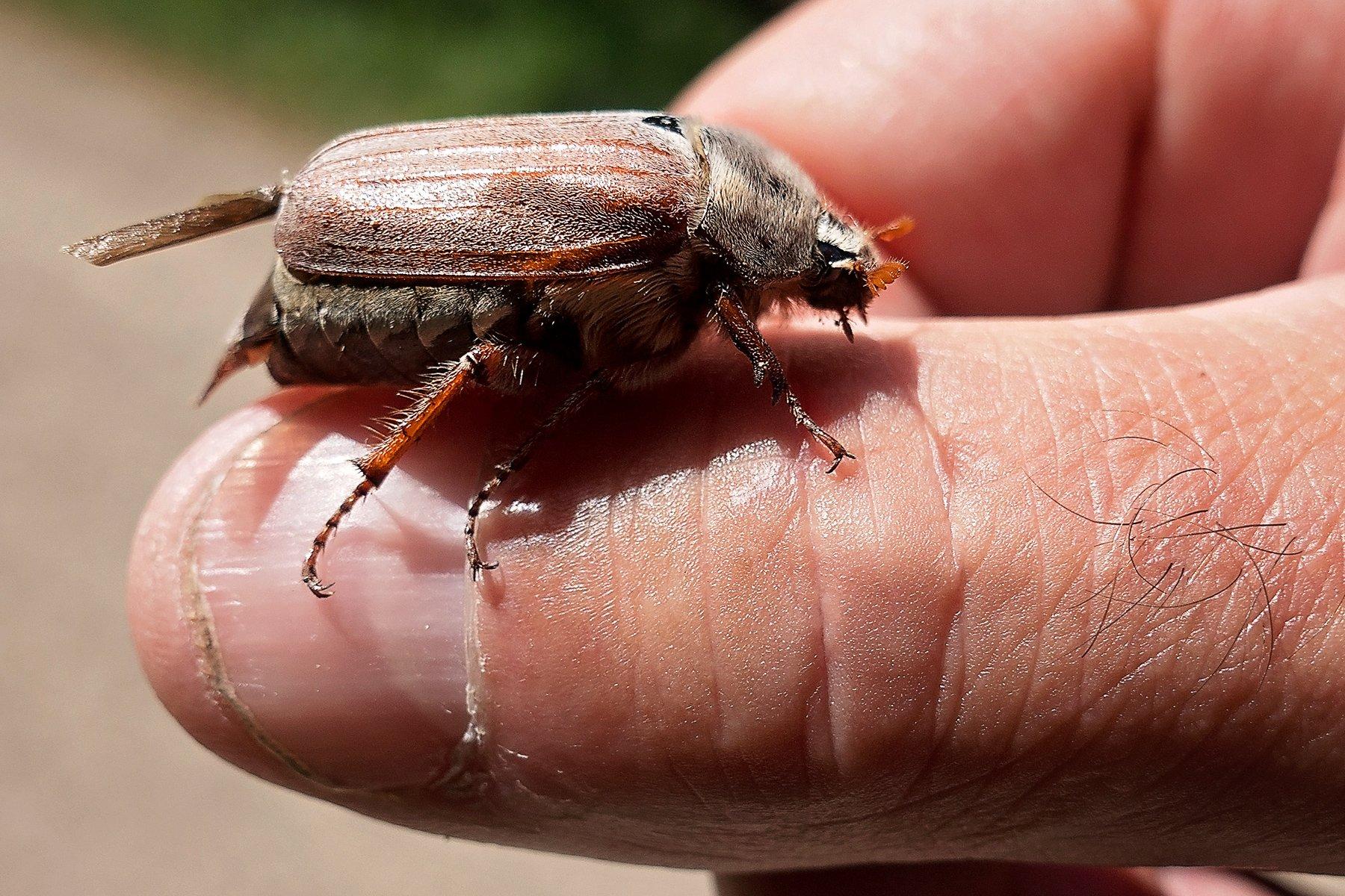 Maybug in Ladybower Reservoir