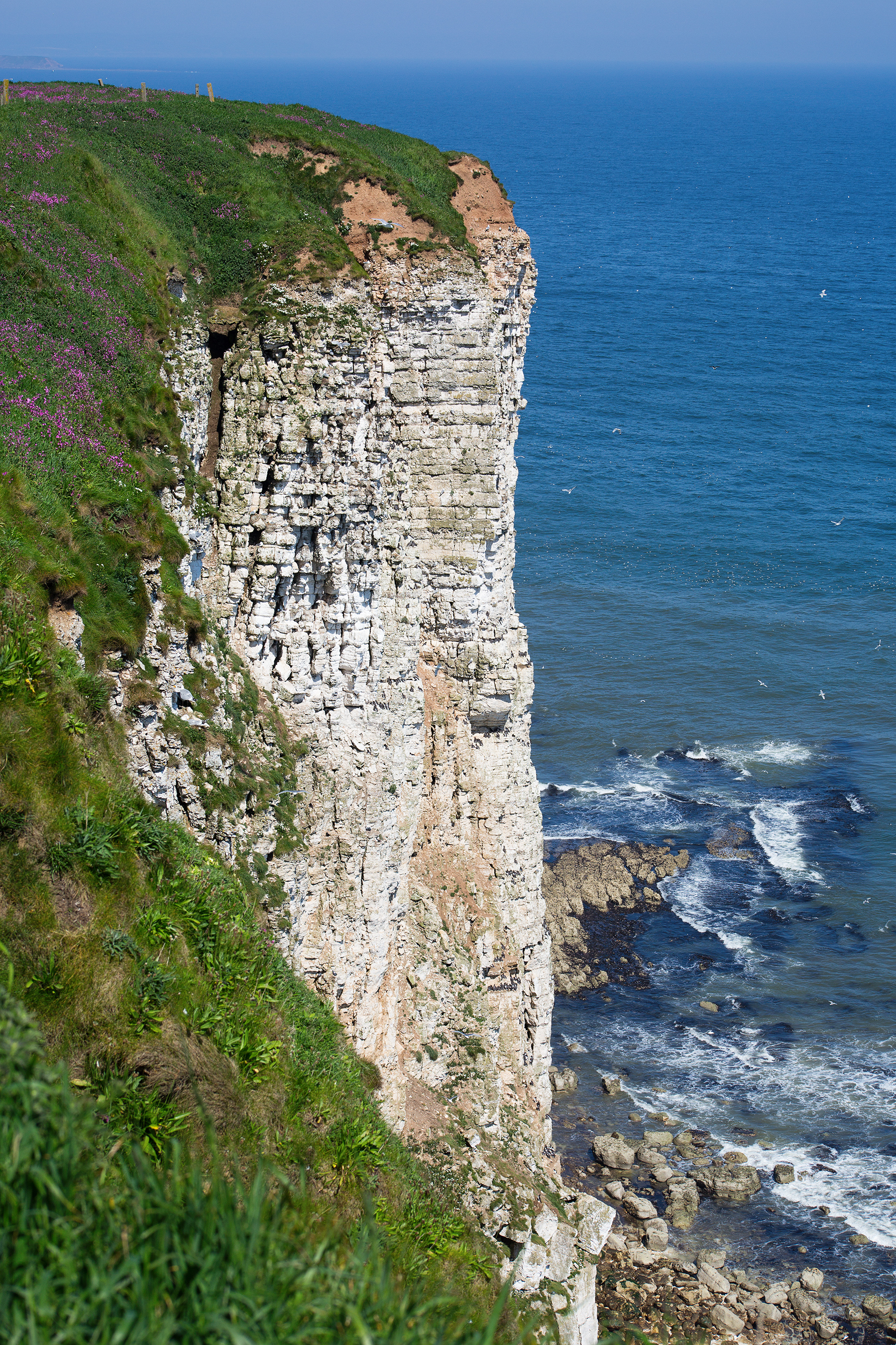 Bempton Cliffs in East Riding of Yorkshire