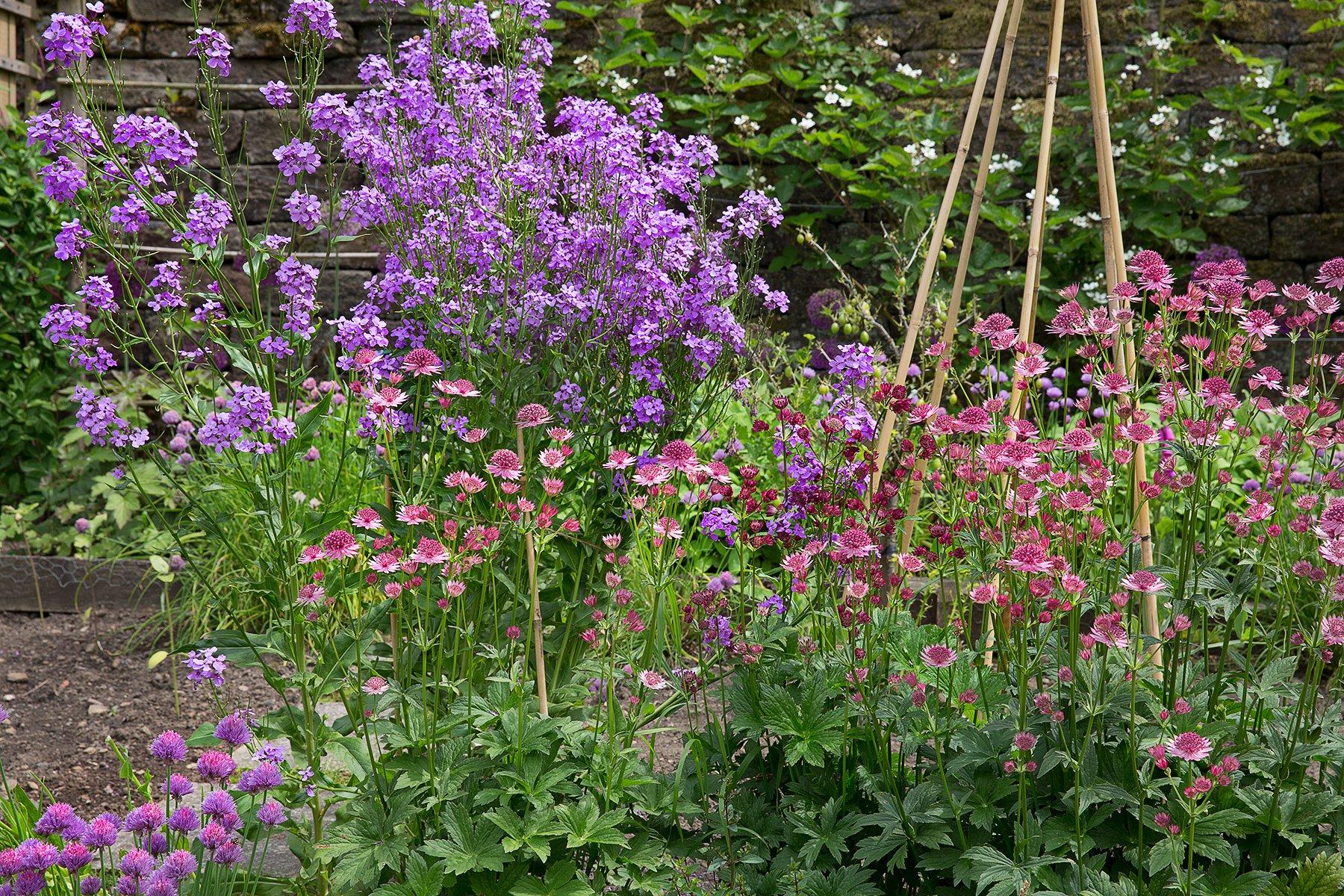 Kitchen garden in Longshaw