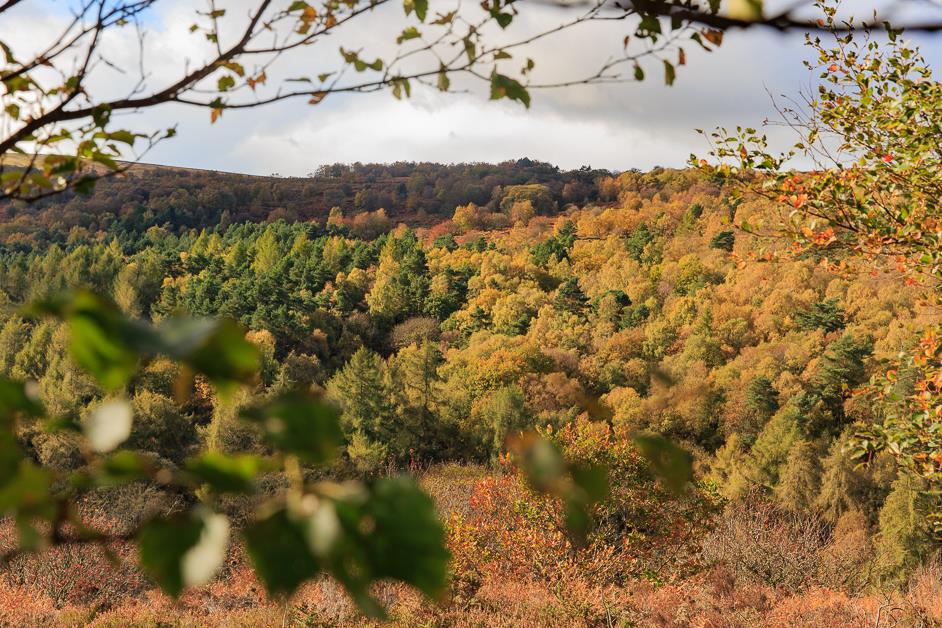 Blacka Moor in Sheffield