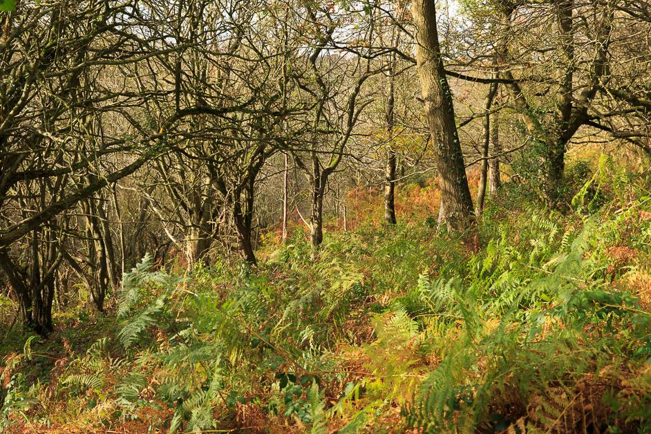 Blacka Moor nature reserve in Sheffield
