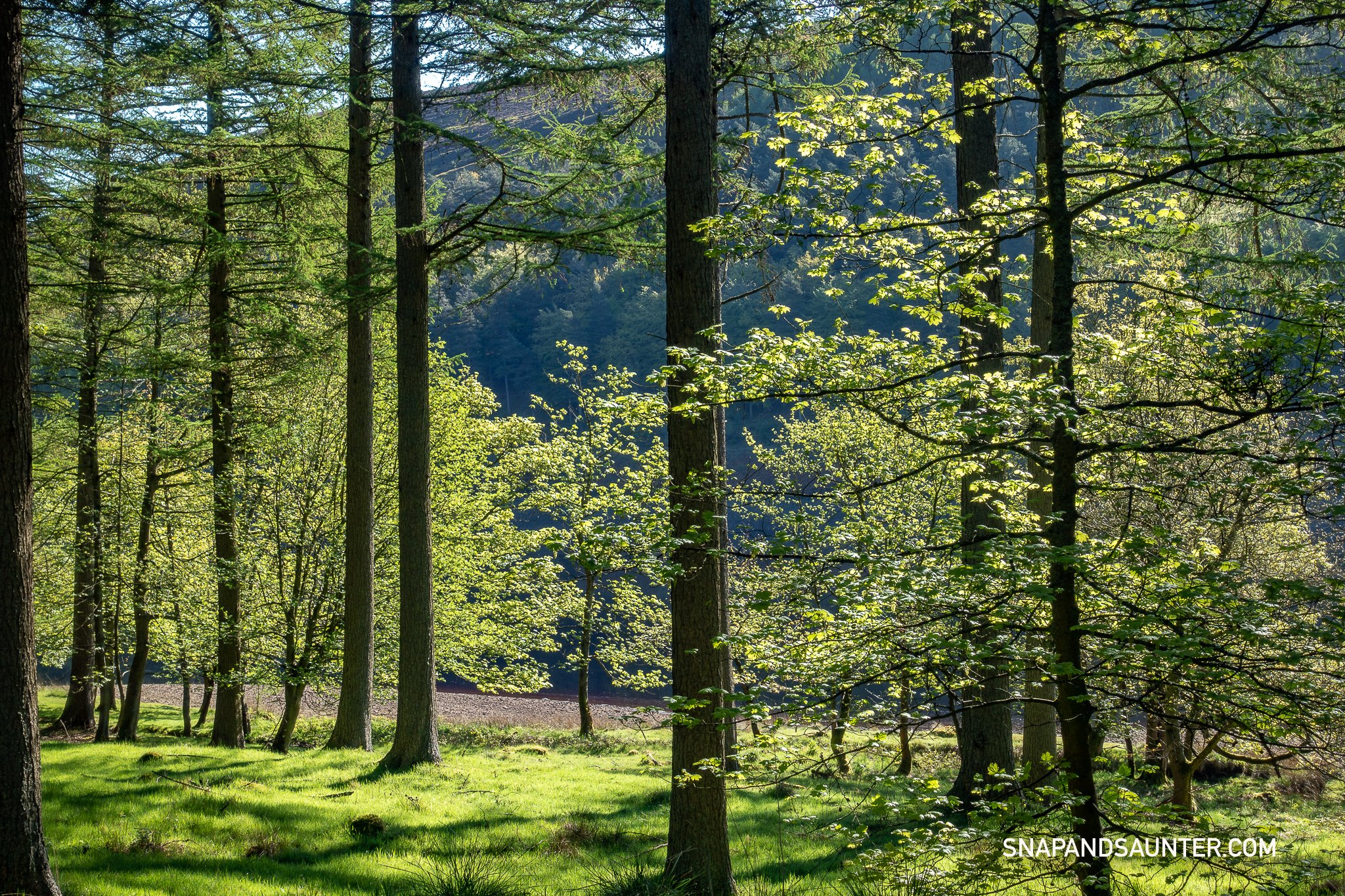Walking through the woods in Upper Derwent Valley in Derbyshire