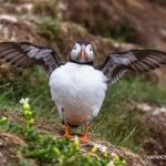 WHY YOU MUST VISIT THE FARNE ISLANDS, NORTHUMBERLAND