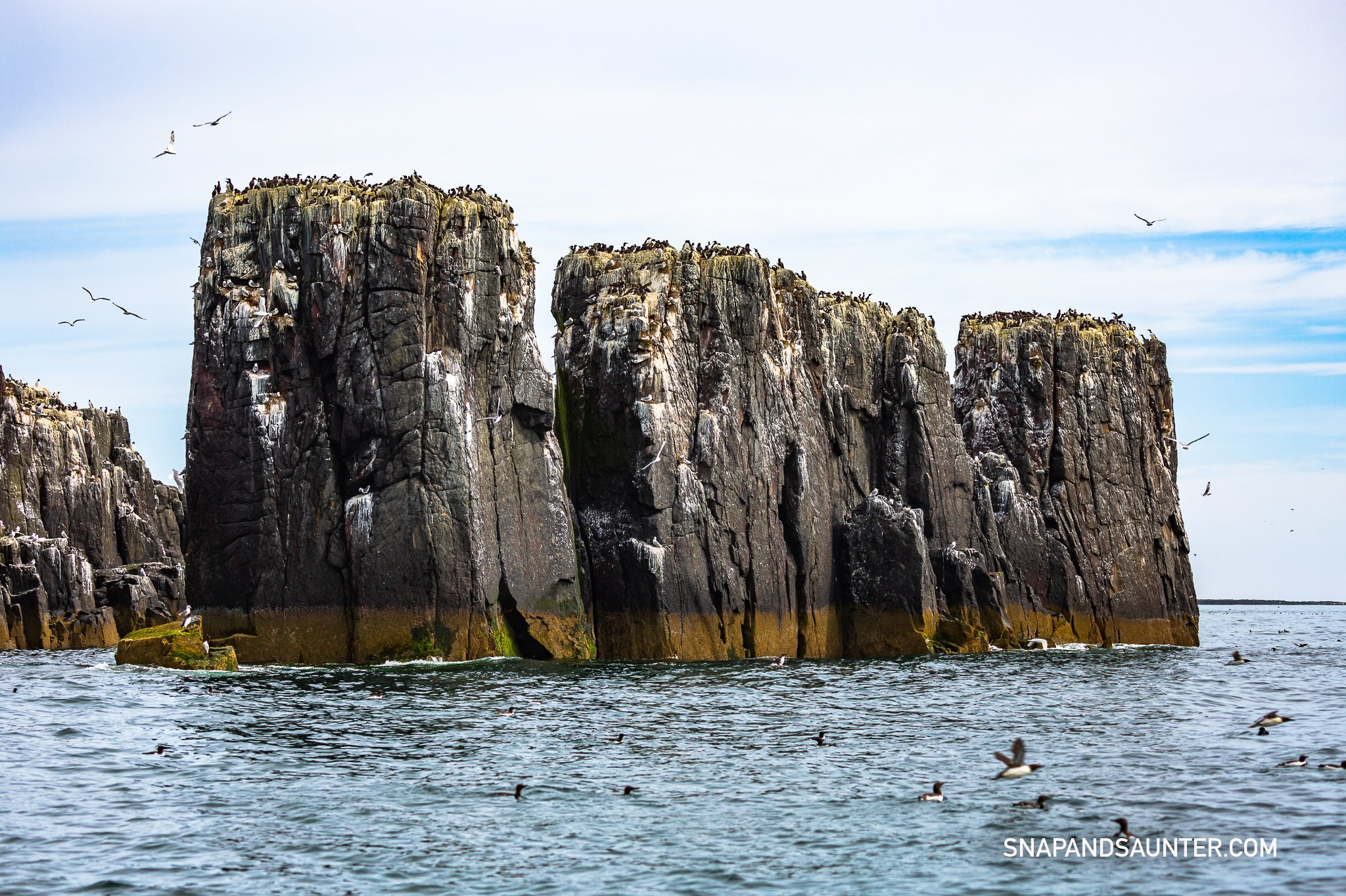 clifs with sea birds at Farne Islands
