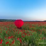 POPPY EXTRAVAGANZA – A PHOTO GALLERY