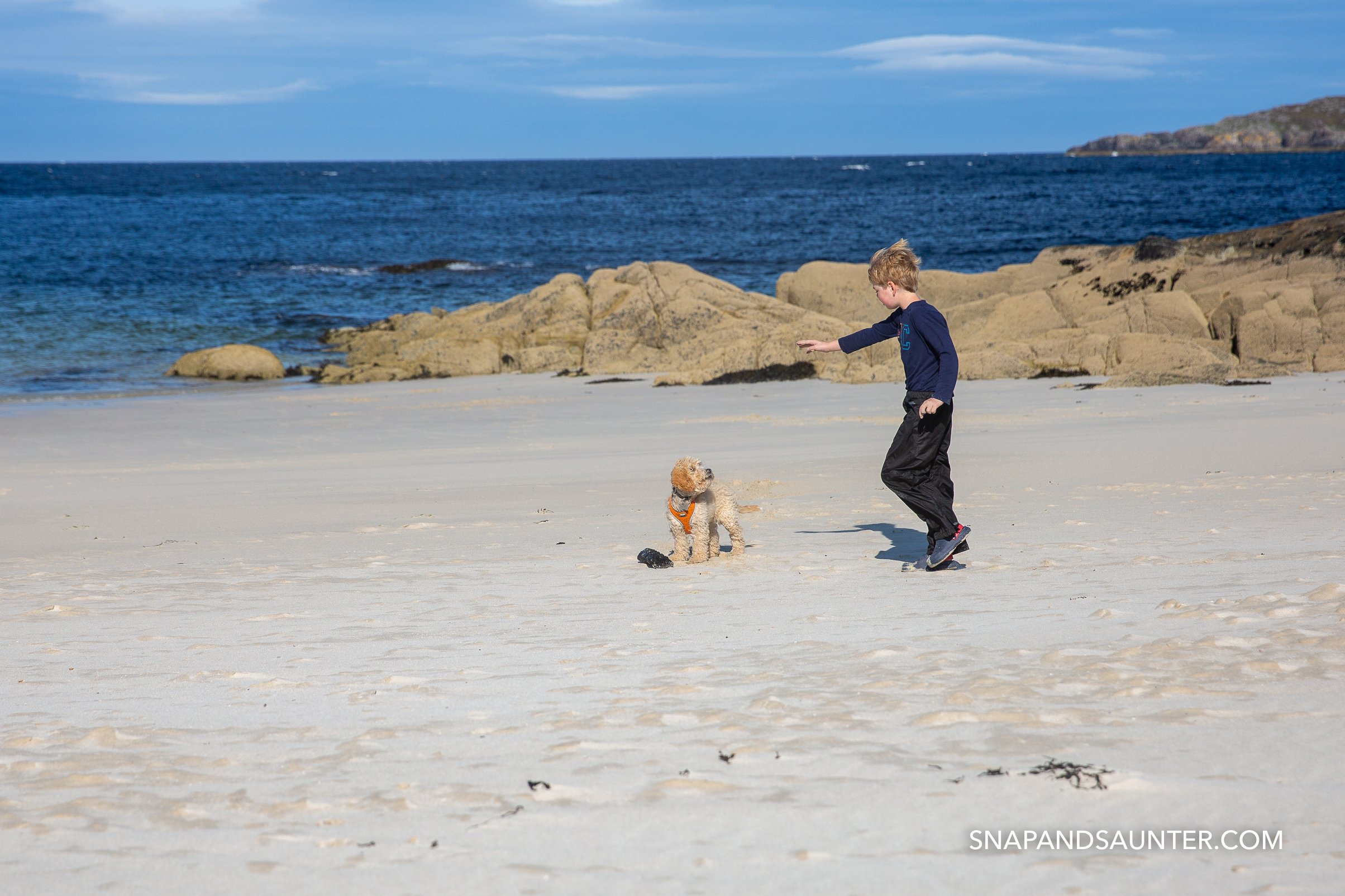 boy and a dog playing on a beach