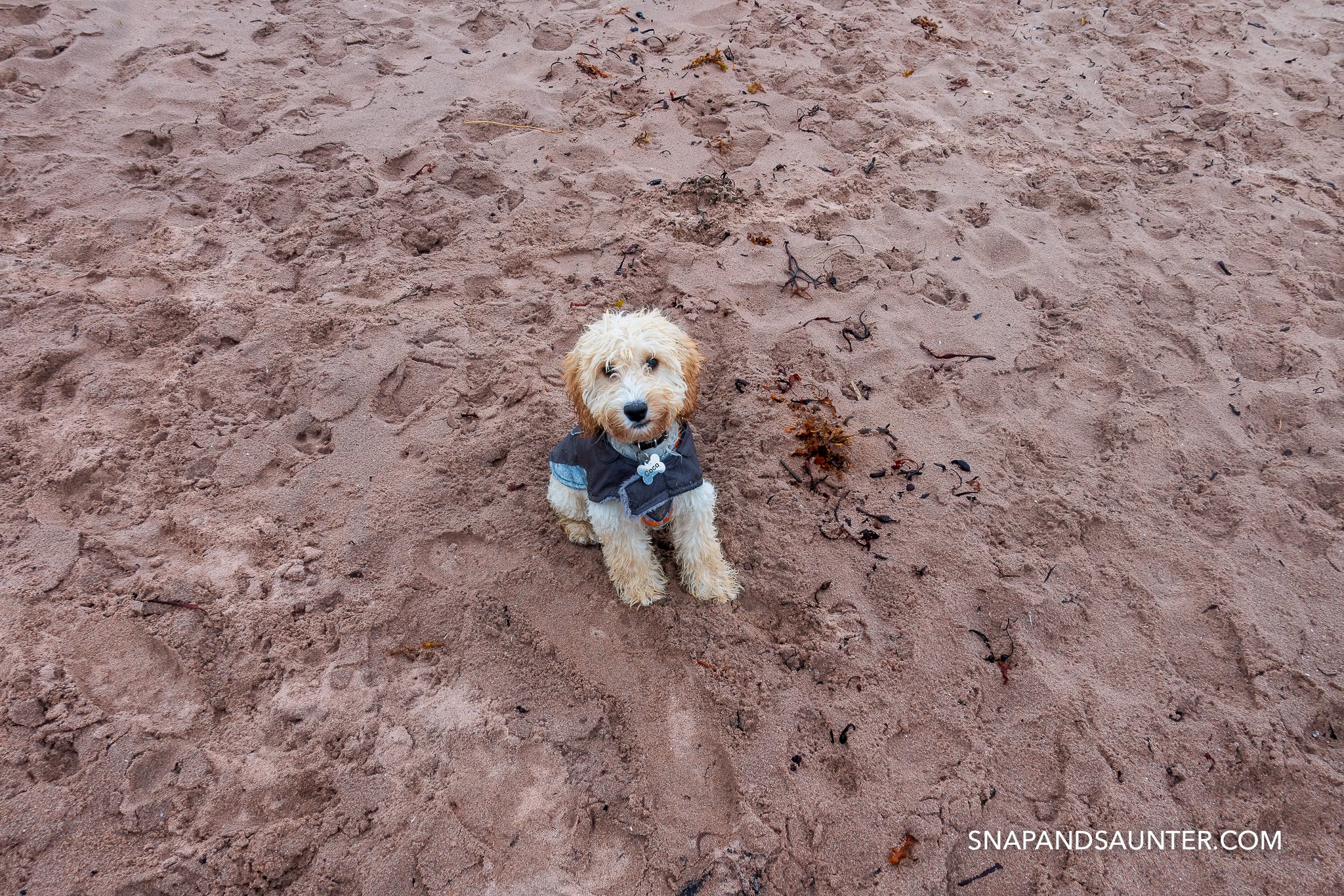A puppy sitting on a red sand beach in the rain