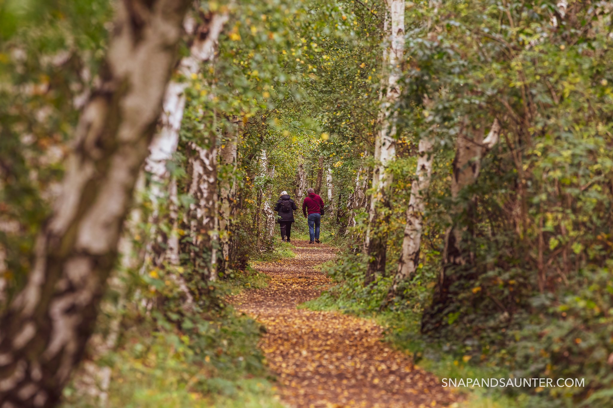a couple walking through silver birch trees in potteric carr nature reserve in doncaster