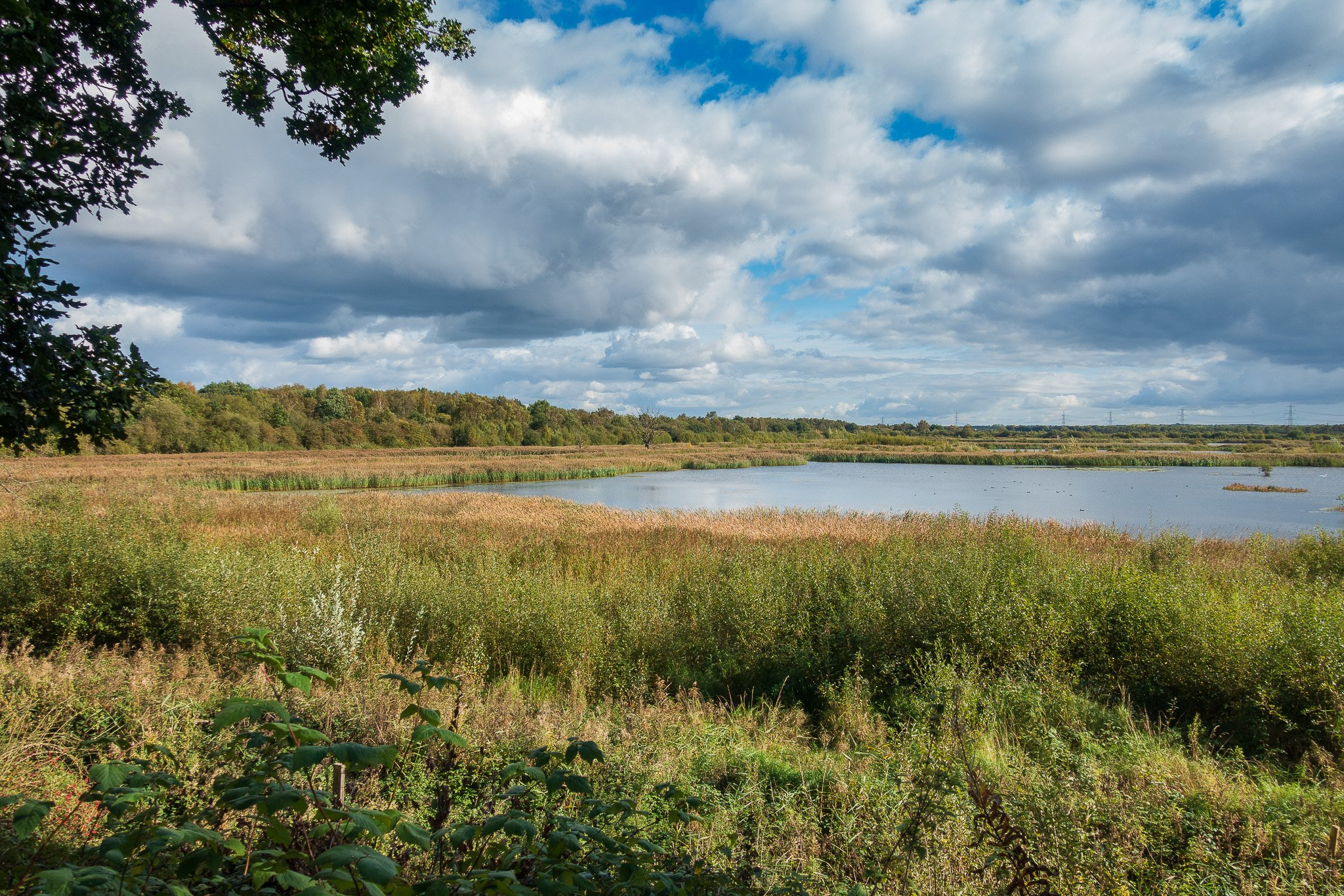Potteric Carr nature reserve in Doncaster