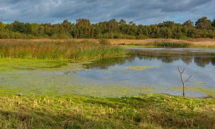 What I Saw at Potteric Carr Nature Reserve, South Yorkshire