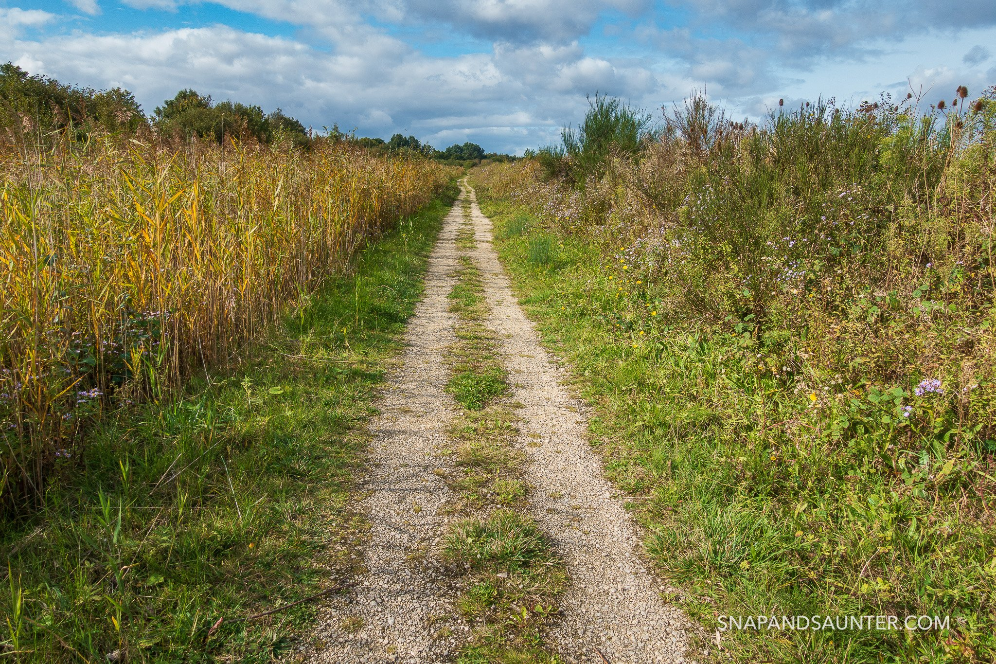 Path at Potteric Carr Nature Reserve in Doncaster