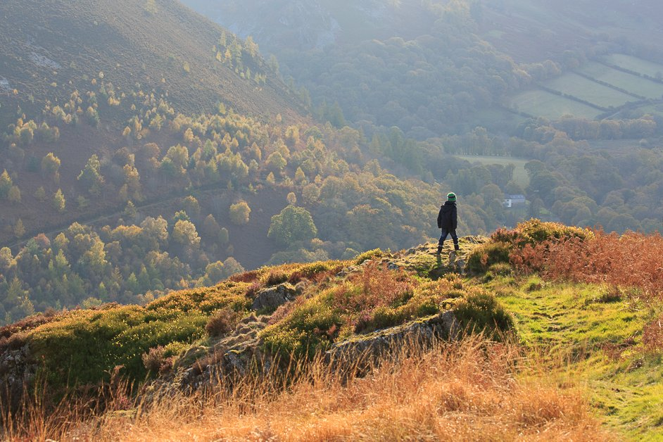 A DAY IN GILFACH NATURE RESERVE – MID WALES